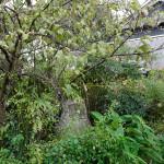小祠の傍らには草に埋もれて石碑と古梅がある。使用人が誤って殺した鶴を弔ったものだという。