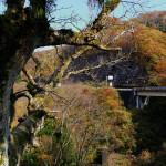峠のトチノキの大木と鏡花も描いた深い谷。