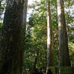神さびた巨木に囲まれた瀧原宮参道