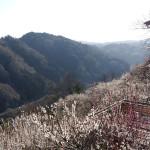 遊歩道沿いの一目八景から名張川の谷を望む。