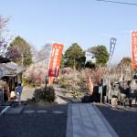 真福寺の境内にも梅が多い。堂宇は皆新しい。