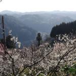 真福寺下から谷越しに月瀬集落を遠望する。